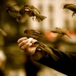 Sparrows-Birds-HD-Wallpapers